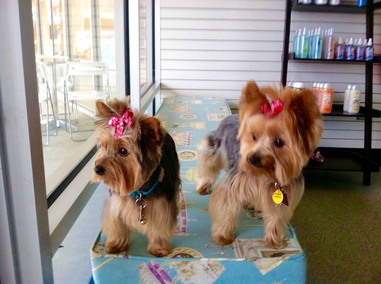 Pup in a tub greer south carolina is a self serve dog wash and yorkies grooming dog wash solutioingenieria Images